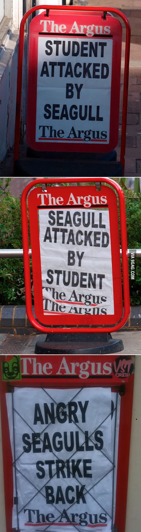 There is a war between seagulls and student in my town.