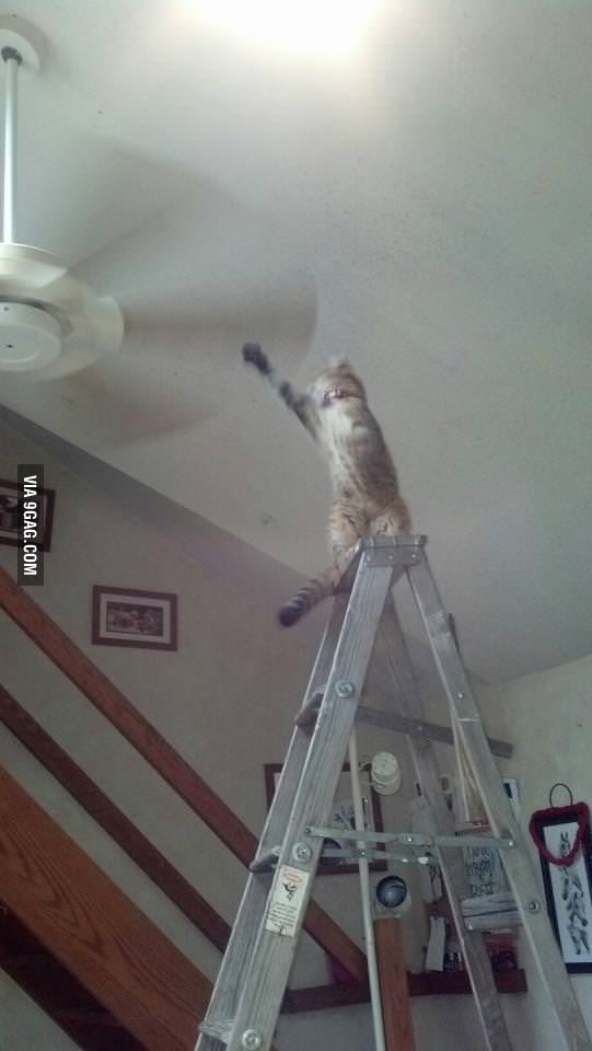 Hi I'm cat and this is jackass.