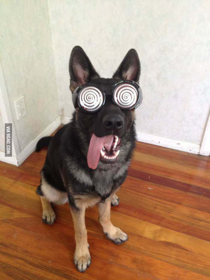 Perfect dog for the Wonka glasses!