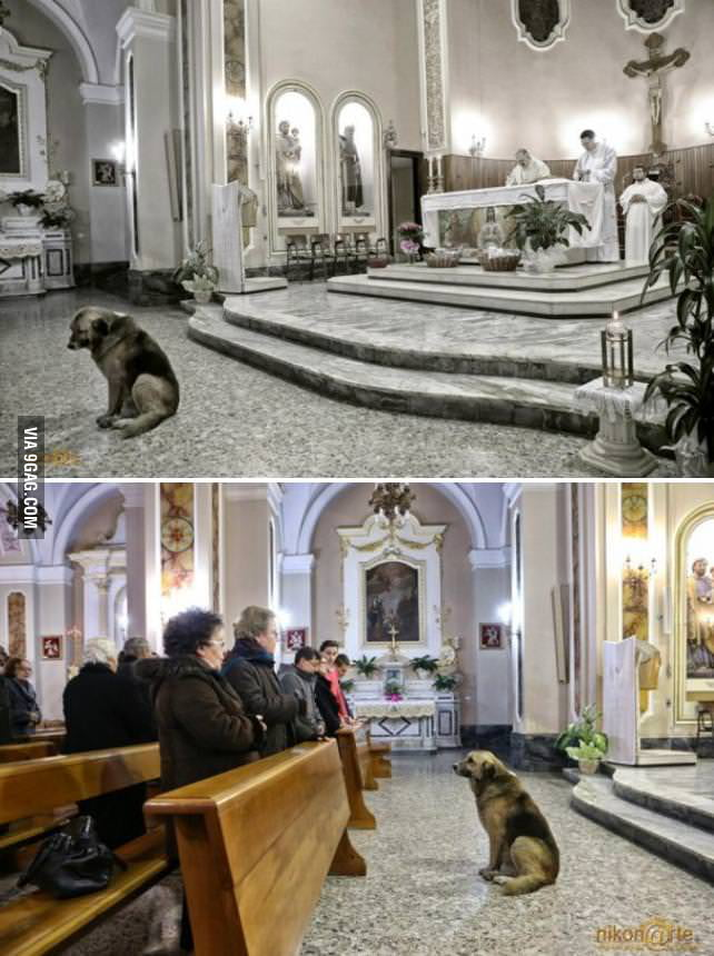 Dog attends daily mass at church where dead owner used to go
