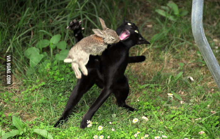 The Killer Rabbit!
