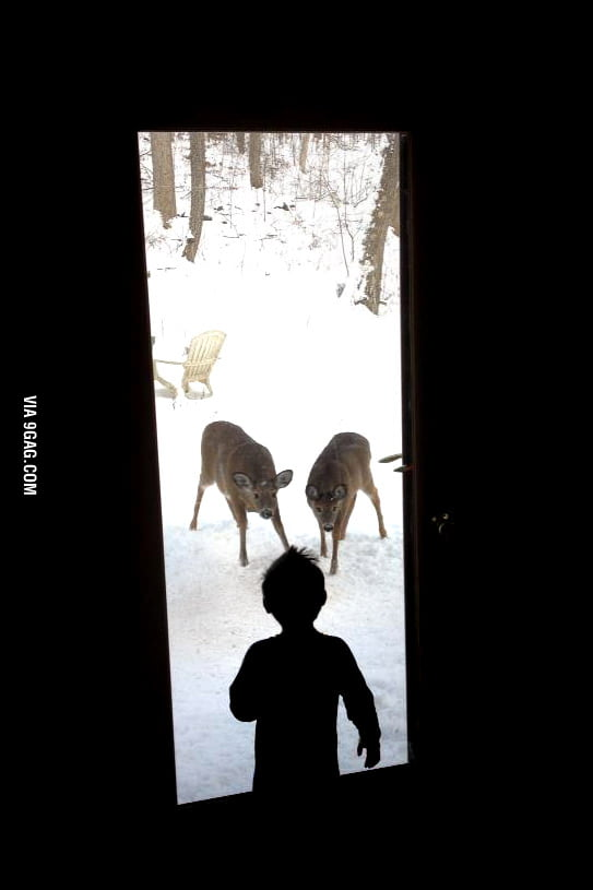 Mutual Curiosity