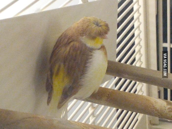 Chris Farley has been reincarnated as a bird.