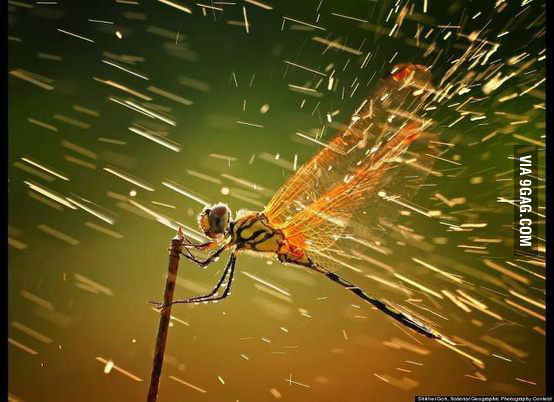 A dragonfly in the rain...