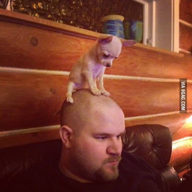 A bald man with a puppy on his head