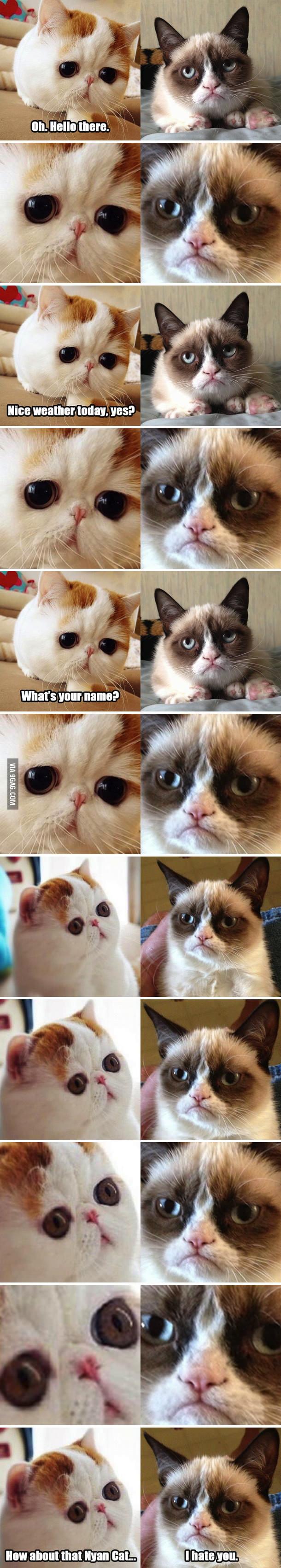 Snoopy Cat meets Grumpy Cat