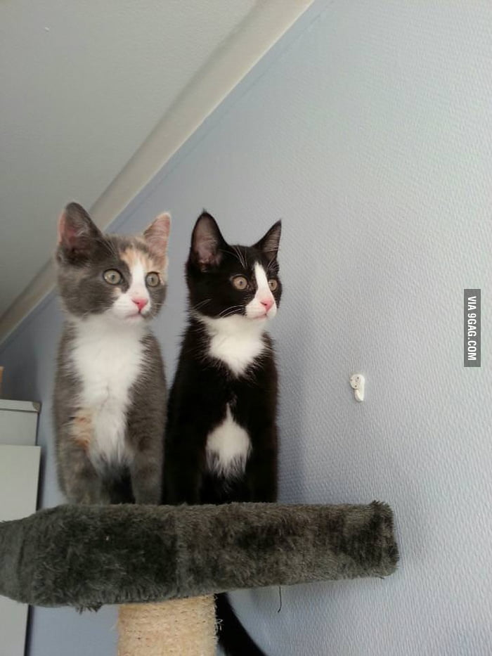 Brother and sister seeing birds for the first time!