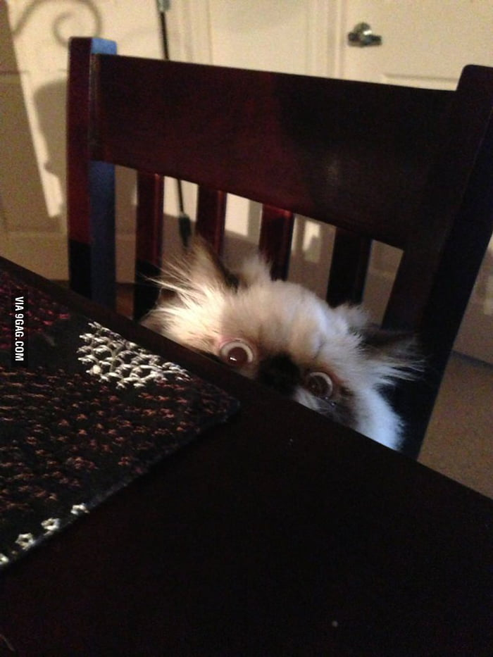 Butters at the dinner table as he's caught creeping.