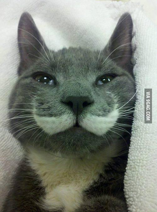 Like a Sir Cat!