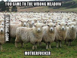 Don't mess with the herd.