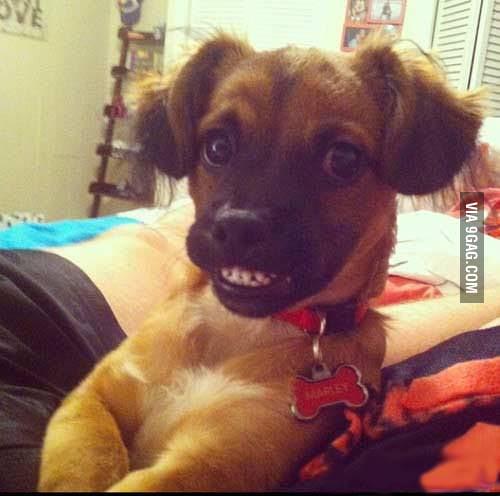 Ridiculously photogenic Dog !!