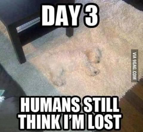 Long lost DOG!!!!