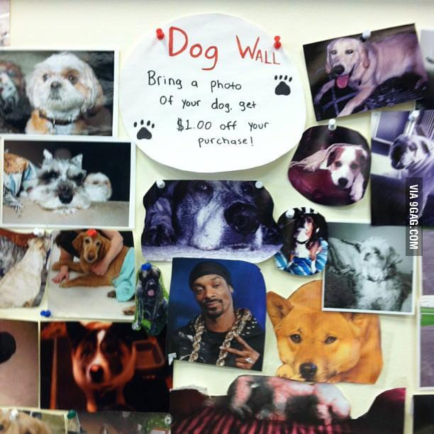 Dog Wall