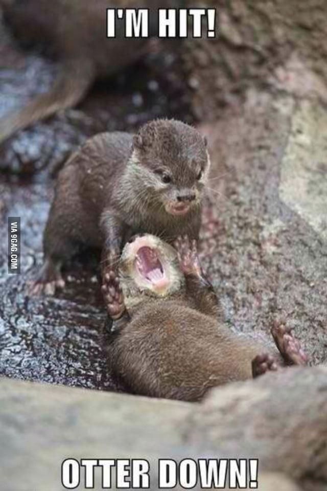 Otter down.