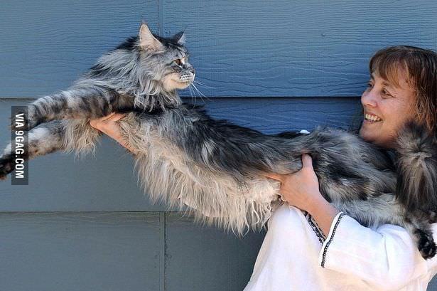 RIP Longcat