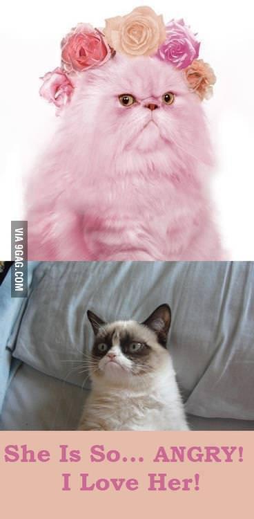 Grumpy pussy