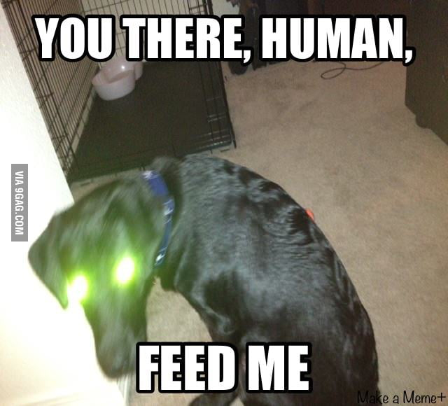 Took a picture of my dog and yeah....