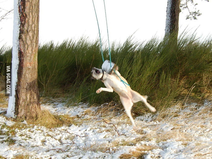 My dog getting attacked by a swing.