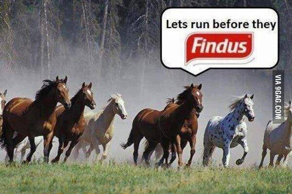 Run before they findus Lasagne
