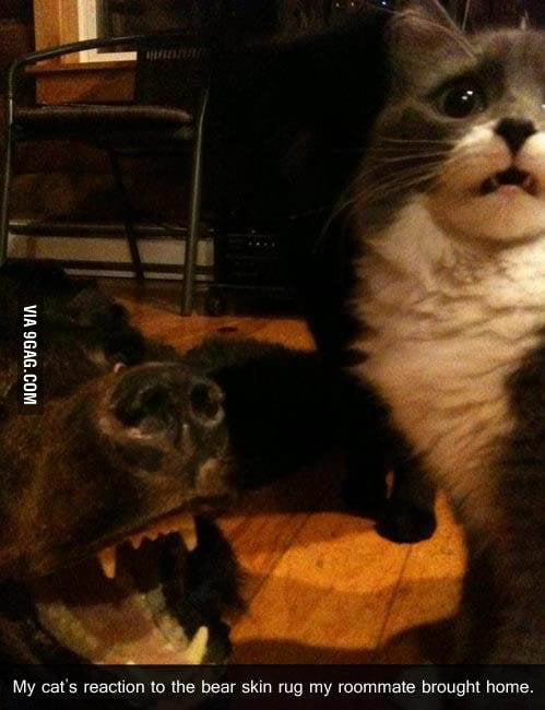 My cat's reaction to the bear skin in my living room
