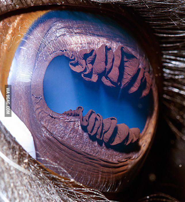 Eye of a Llama
