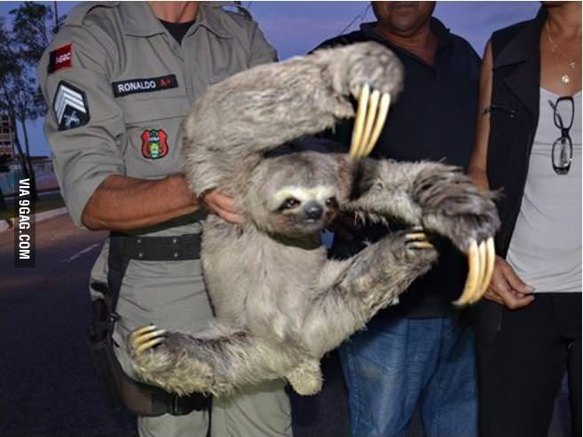 Kung Fu Sloth