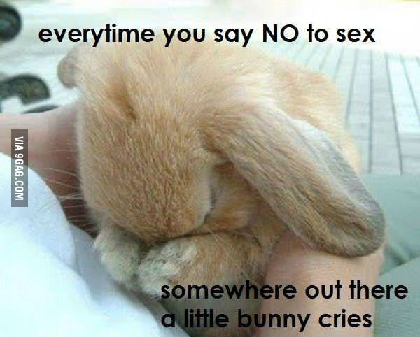 Say YES today and save a bunny tomorrow!