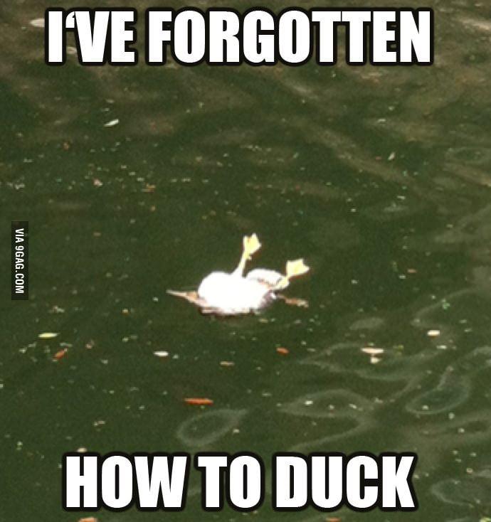 Forgotten how to duck...