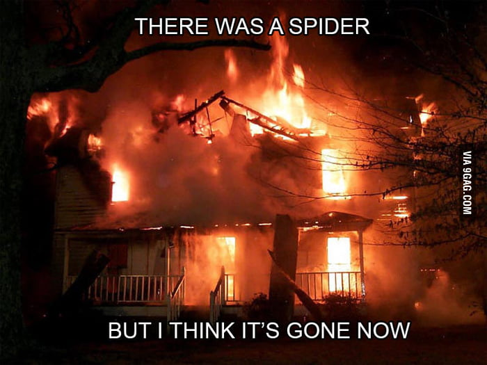 Girlfriends VS Spiders