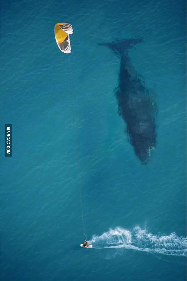 Putting the size of a whale in perspective