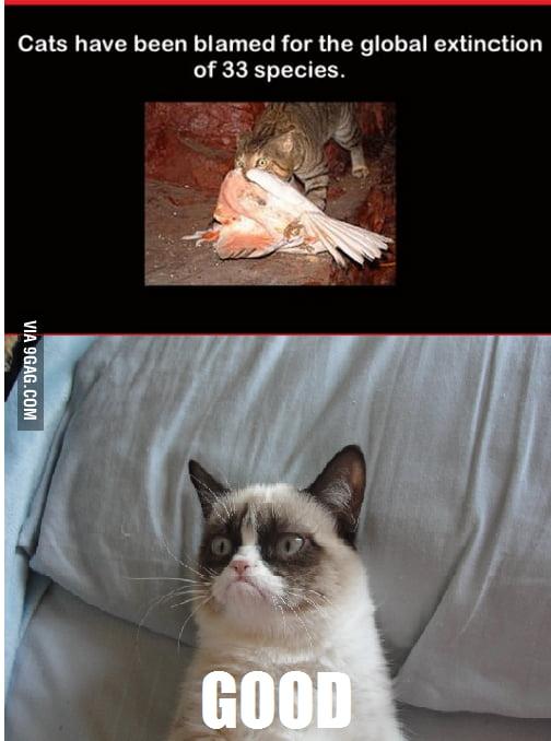 Grumpy cat approves..