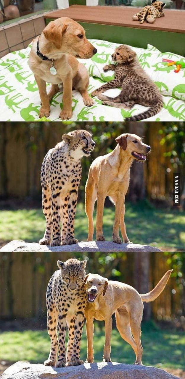 Lovely friendship