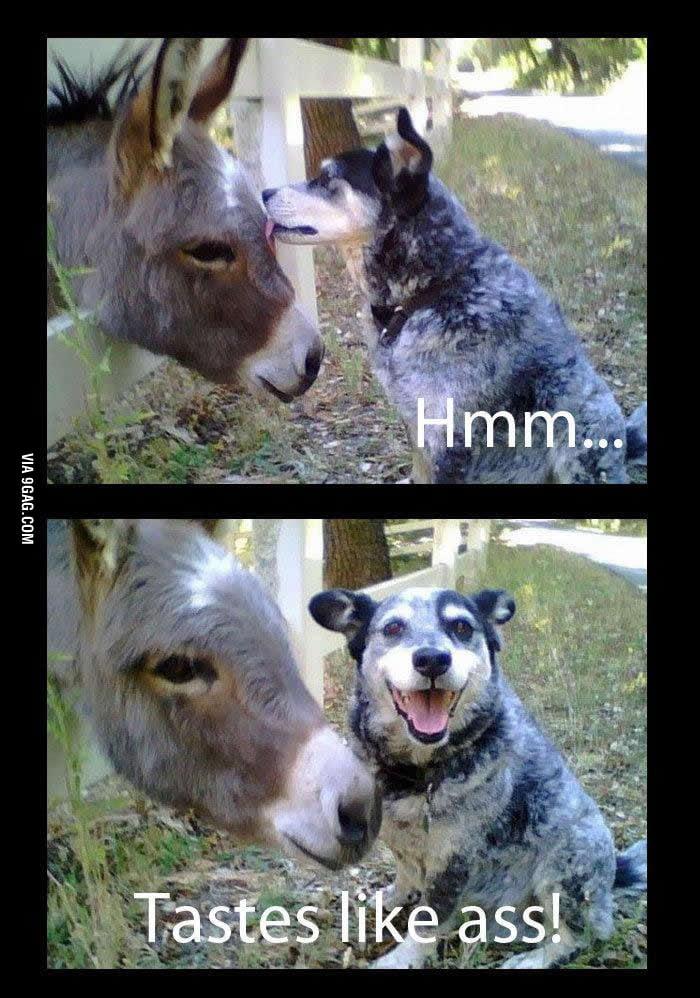 How does the donkey taste?
