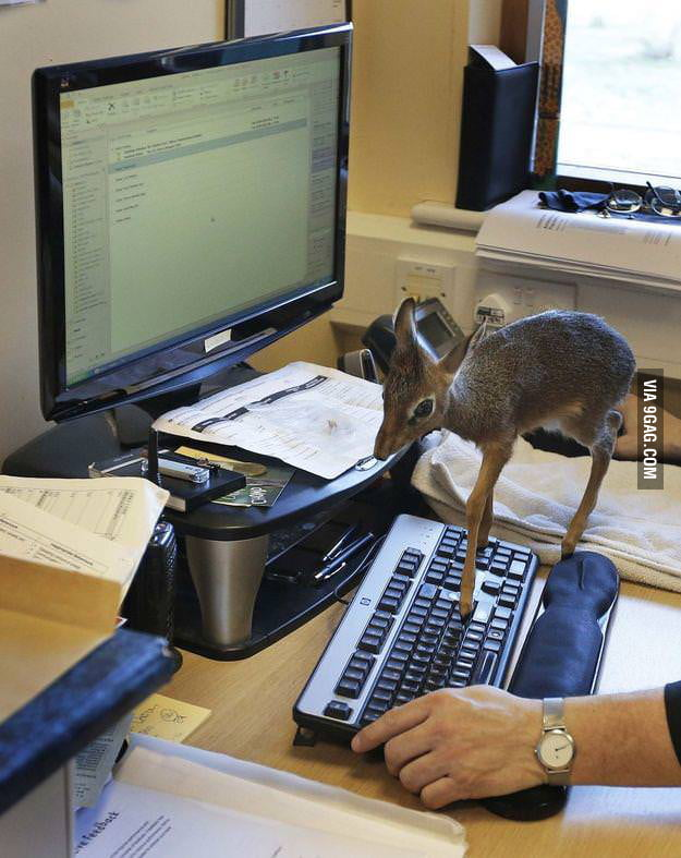 Cats on keyboard are too mainstream