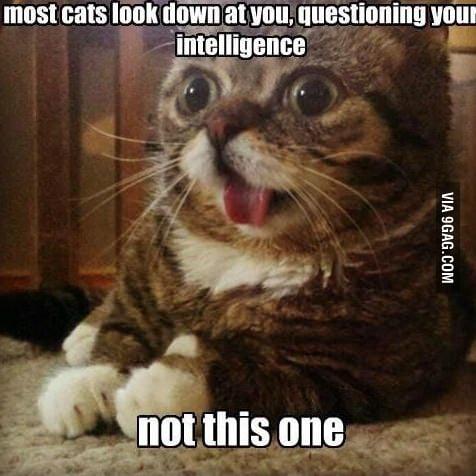 I love this cat