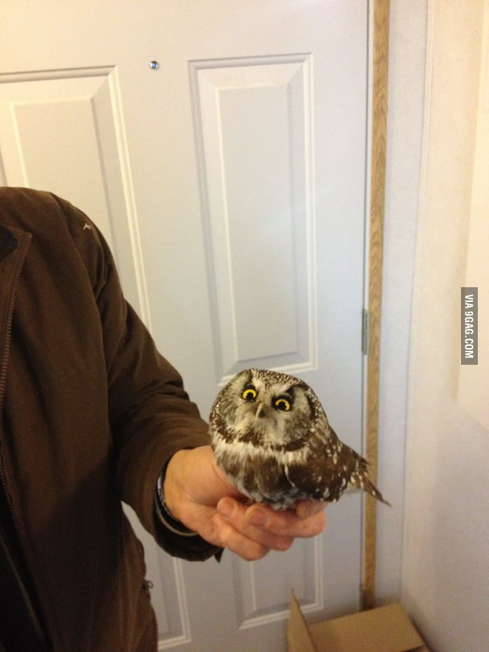 This baby owl hit our window. Gave us this look.