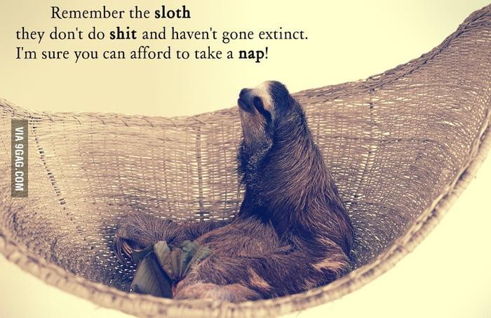 Live like a sloth