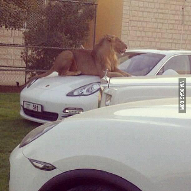 Animals in Dubai