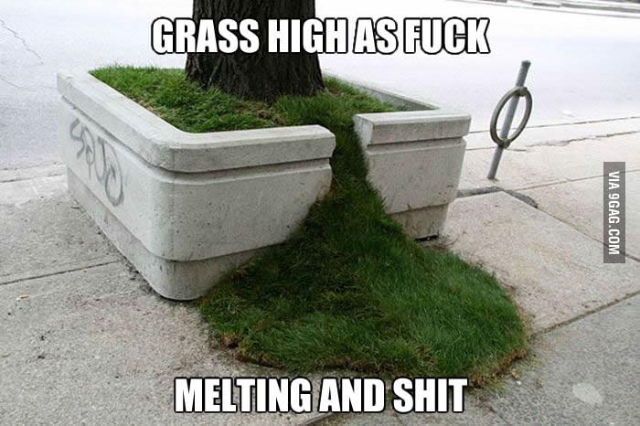 Go home grass