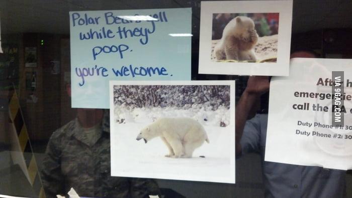 Your daily polar bear fact