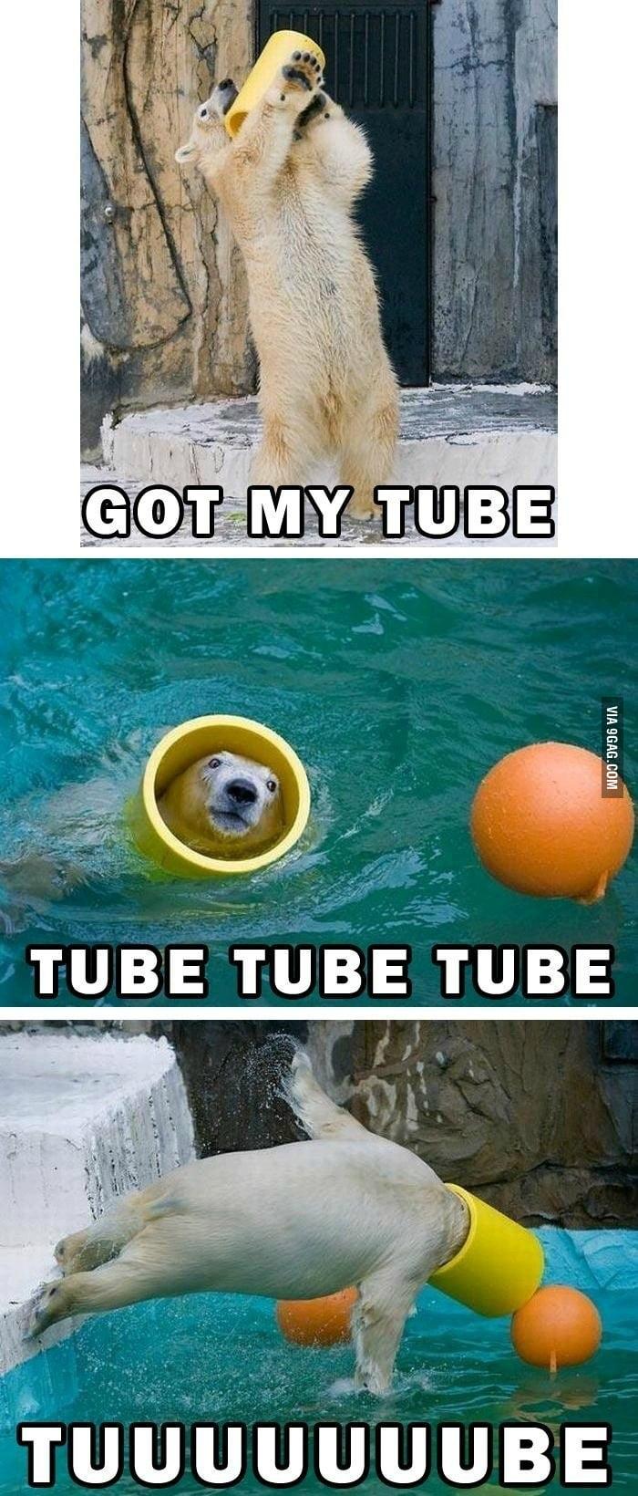 Polar bear tube