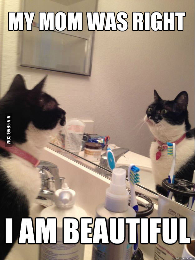 Self Help Cat is beautiful.