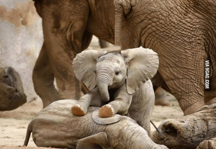 Baby elephant is just cute!