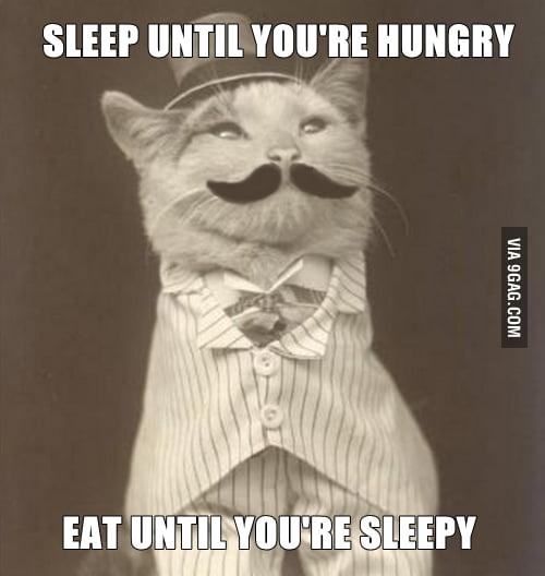 Cat philosophy