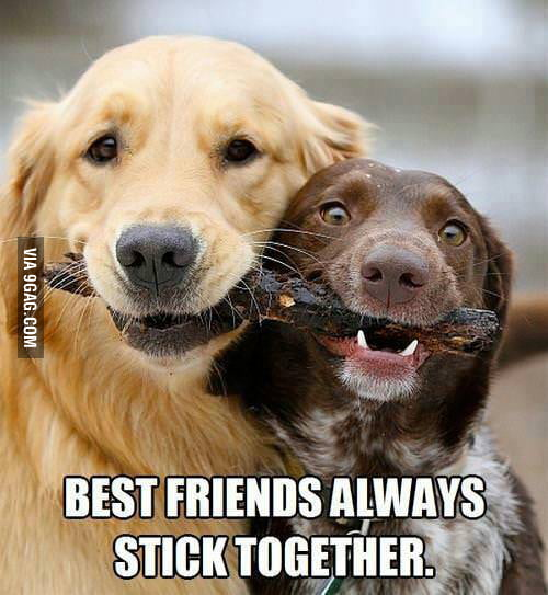 Best friends always stick together