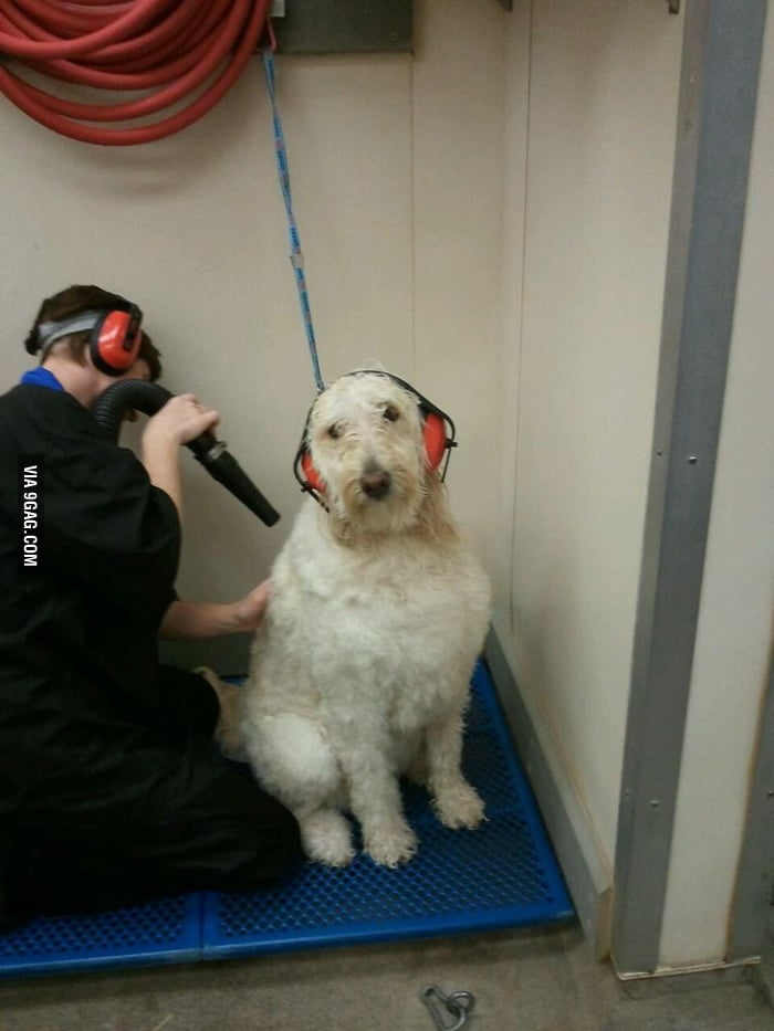 How to keep him from freaking out at the groomer.