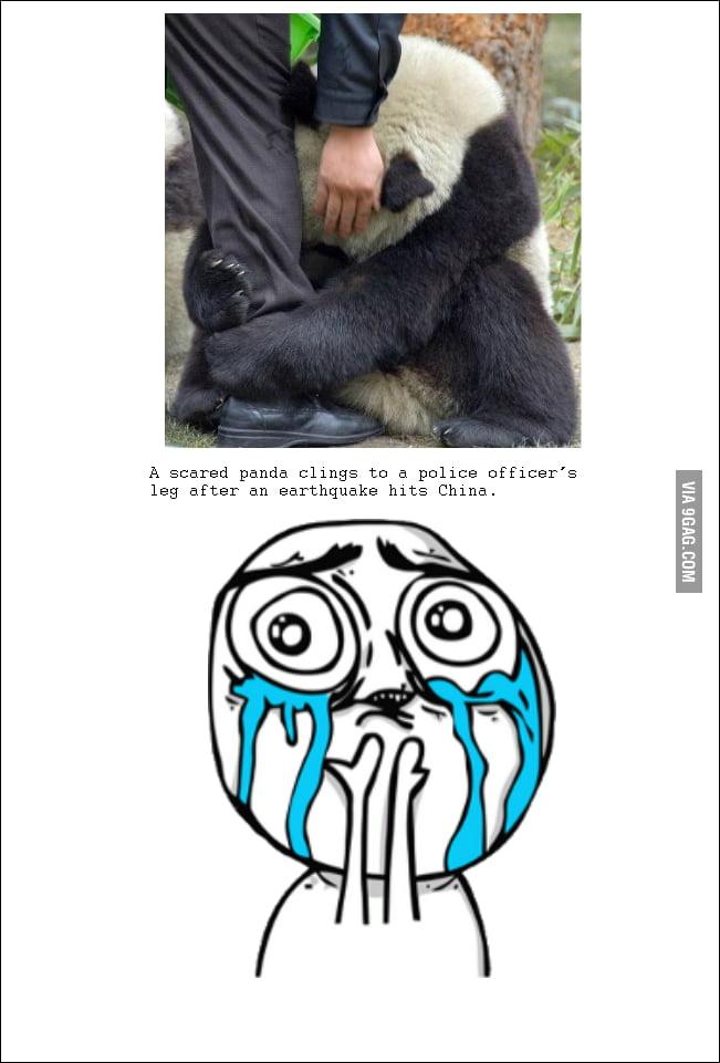 Just a panda.