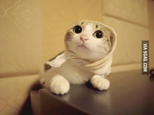 Just a little kitty