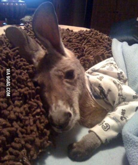 Just a kangaroo wearing pajamas