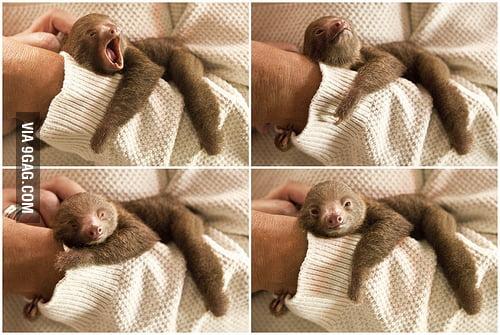Lazy Sloth.